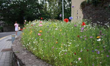 Tidy Towns Planning