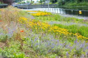 LandscapeDesign_Kilkenny